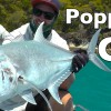 Big GT Popper Fishing James Holt Andy's Fish Video EP.283