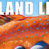 Catch and Cook Coral Trout while Camping and Fishing on a Remote Island!