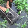 Kids make trap to catch crab in marsh. How to catch crab in marsh.