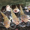 New Fishing Technique Capture a lot of Catfish in Poor Village by #Fishing Man