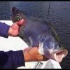 CLOWN Knife Fish {catch clean cook} Absolutely Epic Day of fishing!!!